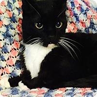 Adopt A Pet :: Pixel - Addison, IL