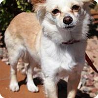 Adopt A Pet :: Foxy - Gilbert, AZ