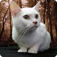 Adopt A Pet :: Didi - New Castle, PA