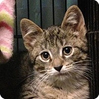 Adopt A Pet :: Kole - East Brunswick, NJ