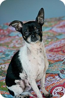 Chihuahua Mix Dog for adoption in Hagerstown, Maryland - Howie