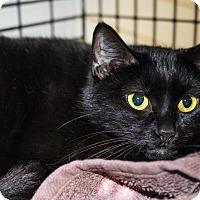 Adopt A Pet :: Amber & Onyx - Acushnet, MA