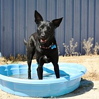 Labrador Retriever Mix Dog for adoption in Littlerock, California - Cici