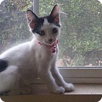 Adopt A Pet :: Arya - Monrovia, CA