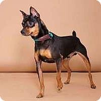 Adopt A Pet :: Bolt - Sudbury, MA