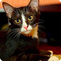 Adopt A Pet :: Skye - Huntsville, AL
