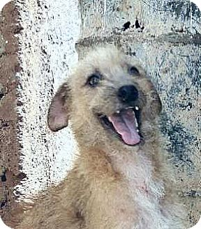 Terrier (Unknown Type, Medium) Mix Dog for adoption in Surrey, British Columbia - Trinny - courtesy post