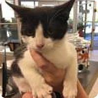 Adopt A Pet :: Gordy 6159 - Columbus, GA