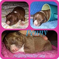 Adopt A Pet :: Penny - Milton, GA