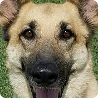 Adopt A Pet :: Roxanne - Nashville, TN