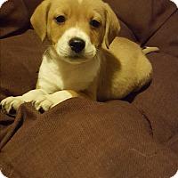 Adopt A Pet :: Jacob - Cleveland, OH