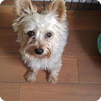 Adopt A Pet :: Farley - Elgin, IL