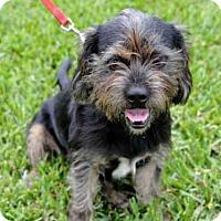 Adopt A Pet :: RUDY - West Palm Beach, FL
