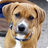 Adopt A Pet :: Bruno - Mayflower, AR