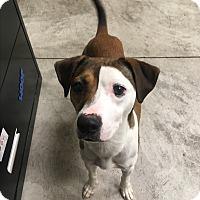Adopt A Pet :: Bonnie - Nashville, TN