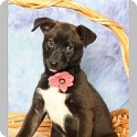 Adopt A Pet :: Mercy - Pittsboro, NC