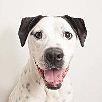 Adopt A Pet :: Zoey Mae - Columbus, OH