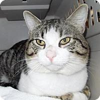 Adopt A Pet :: Scrappy - Glendale, AZ