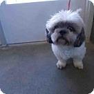 Adopt A Pet :: BJ