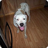 Adopt A Pet :: Pearl - DFW, TX