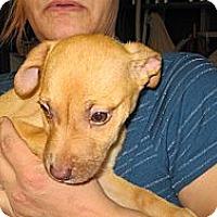 Adopt A Pet :: Penny - South Jersey, NJ