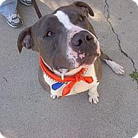 Adopt A Pet :: ARCHIE - Valley Village, CA