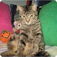 Adopt A Pet :: Chianti - Mission, BC