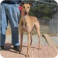 Adopt A Pet :: Cinderella - Oak Ridge, NC