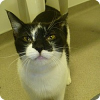 Adopt A Pet :: Joanie - Hamburg, NY