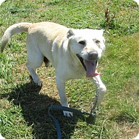 Adopt A Pet :: Whitey - Tillamook, OR