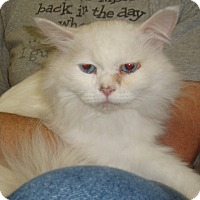 Adopt A Pet :: Fabian - Germansville, PA