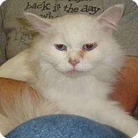 Adopt A Pet :: Fabian - Germansville, PA