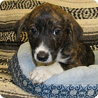 Adopt A Pet :: Early - Charlemont, MA