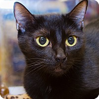 Adopt A Pet :: Onyx - Irvine, CA