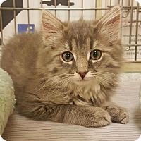 Adopt A Pet :: Priscilla - Jackson, NJ