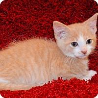 Adopt A Pet :: Ramsey - Richmond, VA
