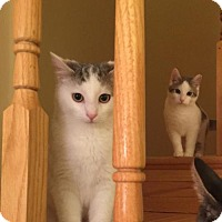 Adopt A Pet :: .Rey and Felix - Ellicott City, MD