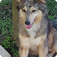 Adopt A Pet :: Izzy *New* 2 years old - Stafford, TX