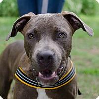 Adopt A Pet :: Hunter - Greenwood, SC