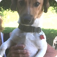 Adopt A Pet :: Winston - Medora, IN