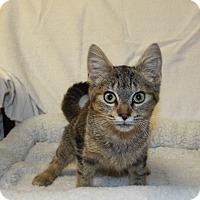 Adopt A Pet :: Teka - Shelby, MI