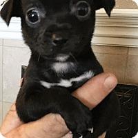 Adopt A Pet :: Zurg - Oakley, CA