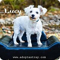 Adopt A Pet :: Little Lucy - Newport, KY