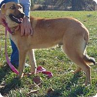 Adopt A Pet :: Ivan - Chicopee, MA