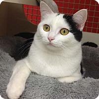 Adopt A Pet :: Chrissy - Merrifield, VA