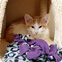 Adopt A Pet :: Ross - Chippewa Falls, WI