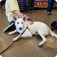 Adopt A Pet :: Nat - Hainesville, IL