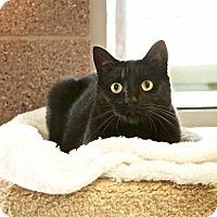Coronado Cat Rescue