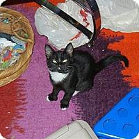 Adopt A Pet :: Dot - Southington, CT