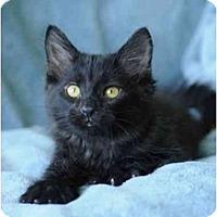 Adopt A Pet :: Drake - Columbus, OH